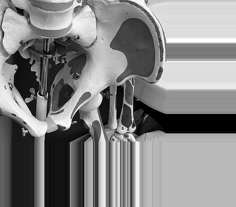skelett2g-beckenwp
